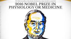 The 2016 NobelPrize Medicine awarded to Yoshinori Ohsumi