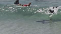 Byron Bay Shark