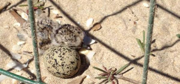 Le uova che si sono chiuse il 22 maggio