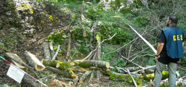 Foto Corpo forestale dello Stato
