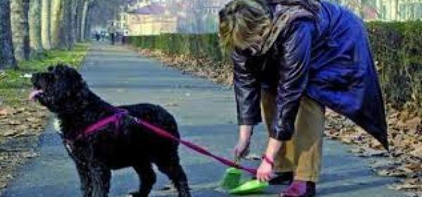 il cane a passeggio