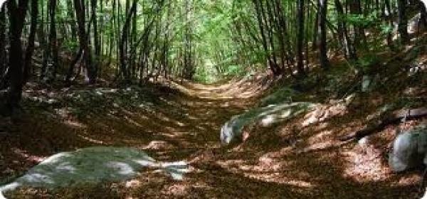 Particolare- Parco Sirente Velino