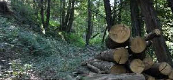 taglio legna