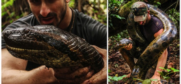 Paul Rosolie e l'anaconda