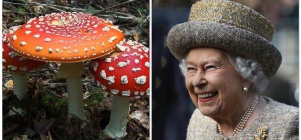 Hallucinogenic Mushrooms At Buckingham Palace Garden
