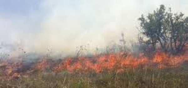 Incendi sterpaglie