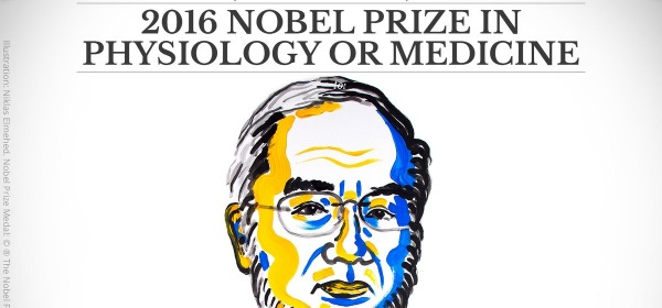 The 2016 NobelPrize Medicine awarded to Yoshinori Ohsumi