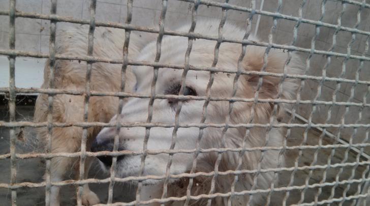 Il cane ritrovato, oggi ricoverato in canile