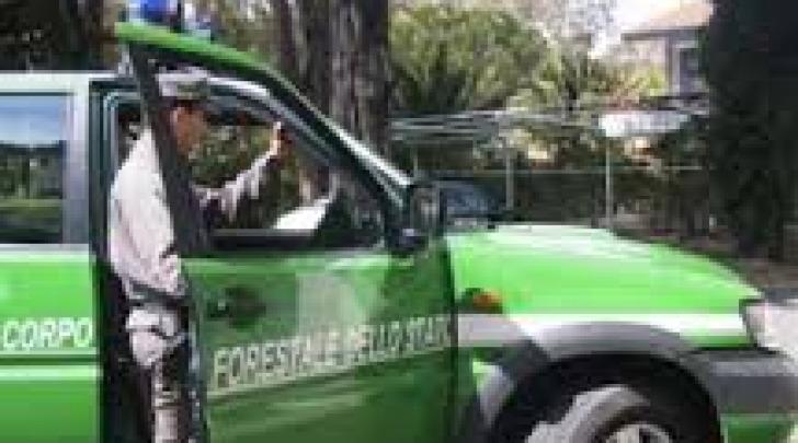 Corpo Forestale dello Stato