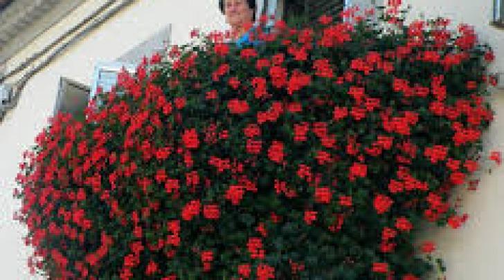 Concorso balcone fiorito