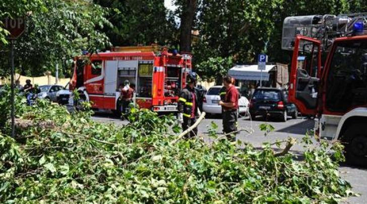 Interventi per caduta alberi- foto ansa
