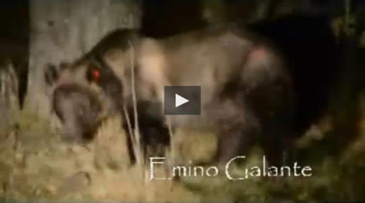 orsa Gemma Video