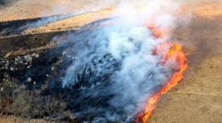 fuoco erbacce