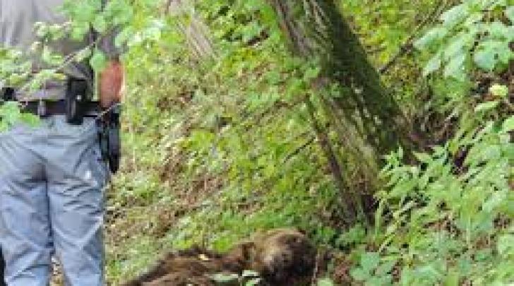Rinvenimento orso morto