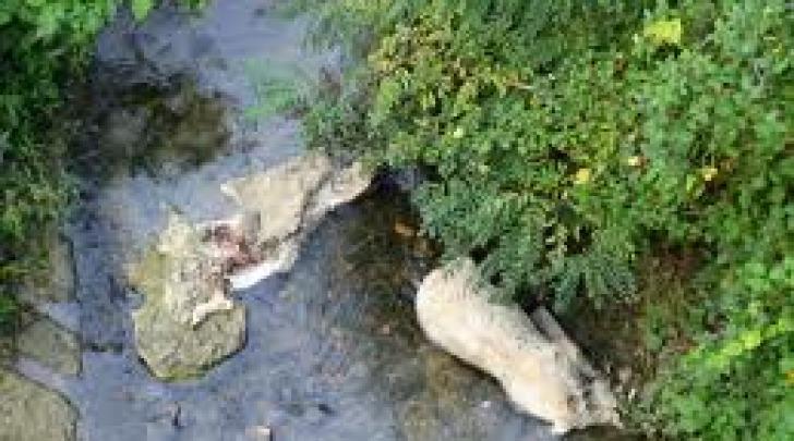 Un tratto del fiume Osento