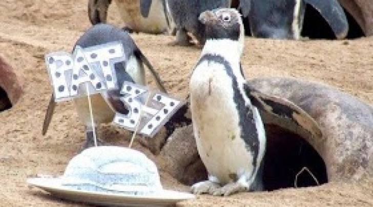 Pat Pinguina