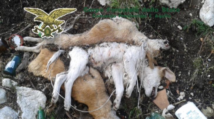 rinvenimento carcasse cagnolini