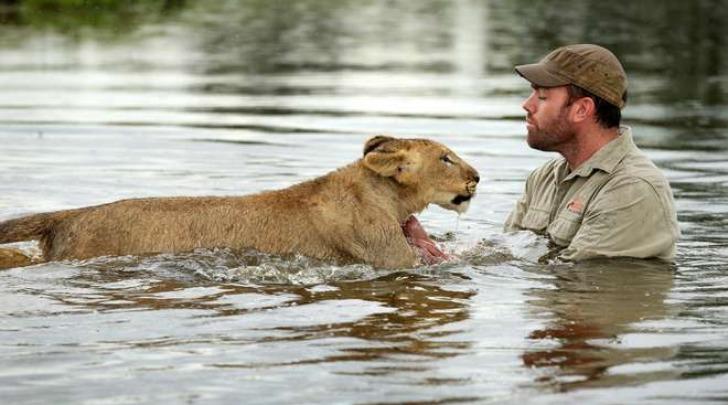 Ben Britton, insegna al leone a nuotare