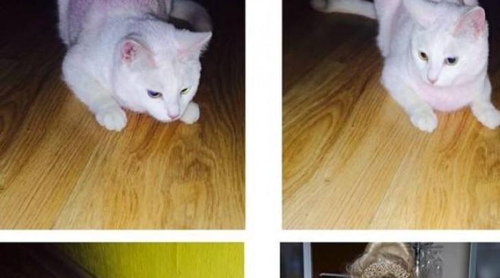 Il gattino tinto di rosa (Metro)