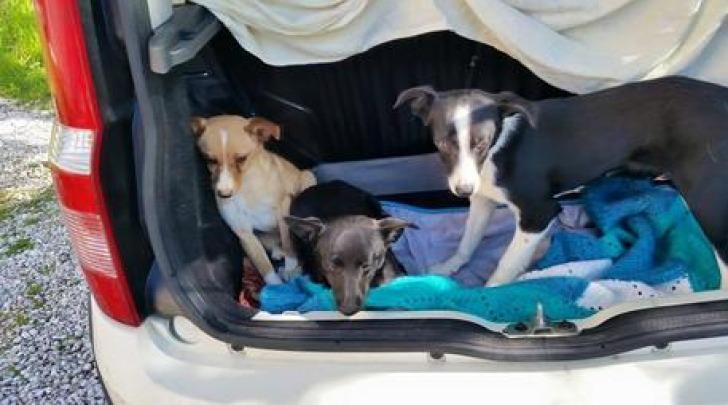 cuccioli salvati- foto ansa