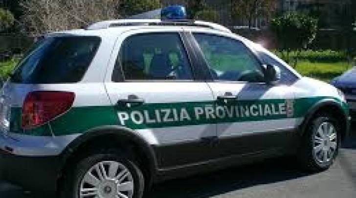 polizia provinciale pe