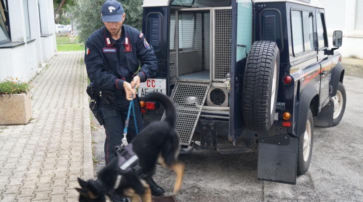 Unità cinofile carabinieri