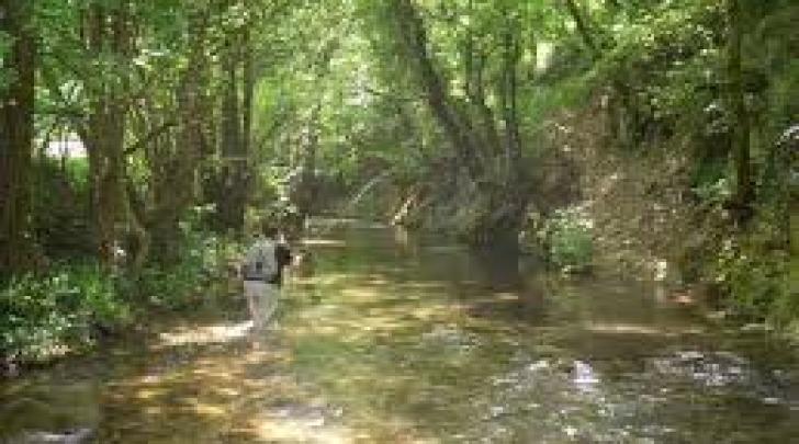 fiume giovenco