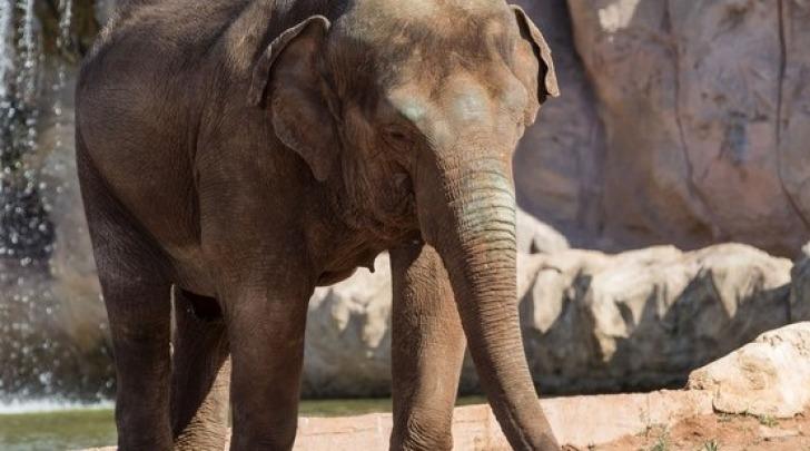 elefante - foto di repertorio